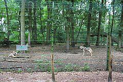 Wolfcenter Dörverden
