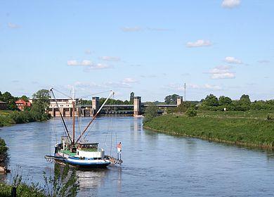 Aaschokker vor dem Weserwehr in Drakenburg